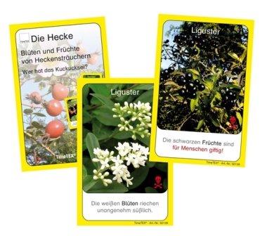 Kartenspiel Blüten u. Früchte v. Heckenstr.